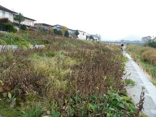 竜山川2015-11(1).JPG