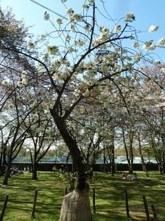 霞城公園2015-6.jpg